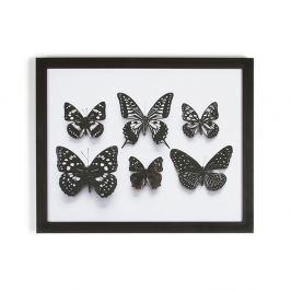 Tablou cu ramă Graham & Brown Botanical Butterfly,50x40cm