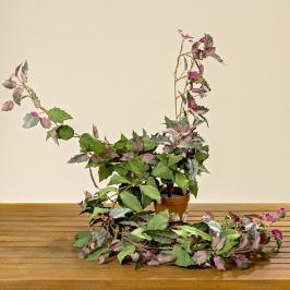 Plantă artificială Boltze Gynura Bush